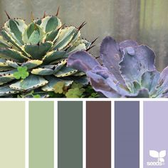 today's inspiration image for { succulent hues } is by @swgardens ... thank you, Southwest Gardens, for another inspiring #SeedsColor image share!