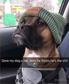 Funny dog vines try not to laugh, funny dog fails try not to laugh Funny Dog Fails, Funny Dog Memes, Funny Animal Memes, Cute Funny Animals, Funny Animal Pictures, Cute Baby Animals, Funny Cute, Cute Dogs, Funny Photos