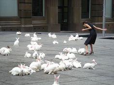 istället för mattor ska jag ha levande kaniner som hoppar omkring och skapar bra akustik