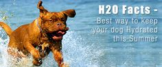 Summer is here!  Do you know how to keep your dog hydrated? https://www.sitstay.com/blogs/good-dog-blog/191127879?utm_campaign=coschedule&utm_source=pinterest&utm_medium=SitStay%20Dogs&utm_content=H20%20Facts%20-%20Best%20way%20to%20keep%20dog%20Hydrated%20this%20summer