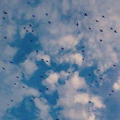 Revoada dos Pássaros pelas Ruas de Araçatuba Ano 2014