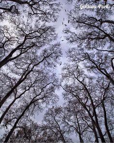 有托普卡匹皇宮後花園之稱的古而哈內花園裡的參天老樹,在冬天即使樹葉凋零也如此美! ©olcayaytar