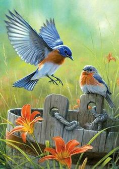 Features larger pieces Beautiful Hautman Brothers artwork Lovely picture of birds in nature made in the United States Bonus poster inside Pretty Birds, Love Birds, Beautiful Birds, Birds 2, Flying Birds, Humming Birds, Wonderful Flowers, Beautiful Fairies, Exotic Birds