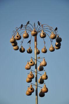 Martin birds gourd tree in Alabama