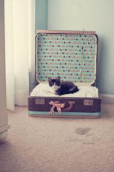 HOME GARDEN: Des lits en valises recyclées pour nos amis les animaux