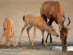 Life in the desert is so hard. Getting waterhole is a miracle. #Animals #Wildlife #Kenya #TembeaKenya http://trevarontours.com/