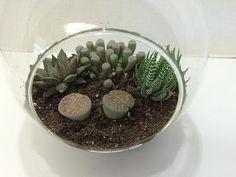 Succulent Plant Glass Globe Terrarium DIY by SucculentBeauties