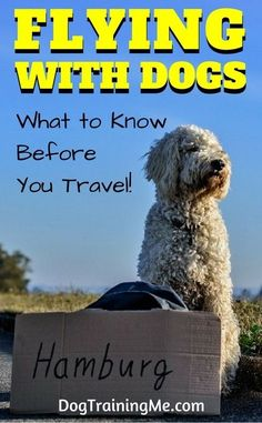 Flying with dogs. What you must know BEFORE you travel. View a list of airports with dog potty stations, learn how to calm your dog before and during the flight, and more, all in this article! Dog Training Techniques, Dog Training Tips, Potty Training, Flying Dog, Dog Minding, Dog Potty, Easiest Dogs To Train, Dog Travel, Travel Tips
