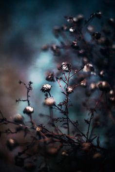 * by Michaela Rother on Nature Aesthetic, Blue Aesthetic, Cool Pictures, Beautiful Pictures, Midnight Garden, Photography Camera, Flowers Nature, Cute Wallpapers, Aesthetic Wallpapers