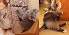 Jak odstavit kočku zkazit tapety a nábytek? - Tipy a triky