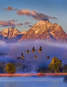 asleepnature:  oecologia:  Dawn Flight byMark Lissick.  http://asleepnature.tumblr.com capie :)