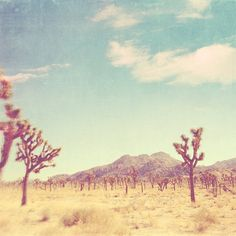 landscape photography, Joshua Tree national park California travel, Palm Springs desert photography, nature, vintage blue yellow, Coachella