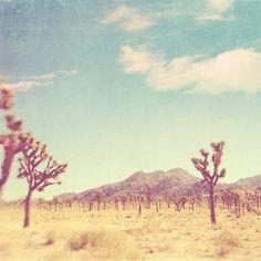 landscape photography, Joshua Tree national park California travel, Palm Springs desert photography, nature, vintage blue yellow, Coachella. $15.00, via Etsy.