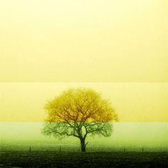 Landscape photography  Tree photograph  Fine by ZenzPhotography