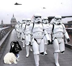 May the Fourth Be With You - Darth Casper skywirestudios#maythe4th #maythe4thbewithyou #Maythefourth #maythefourthbewithyou #starwarsday #starwars #officedog #dogsofinstagram #westie #westiegram #dog #darthvader #london #photoshop #graphicdesign #skywirestudios