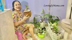Indoor Plants, Gardening, Mom, Decor, Fashion, Inside Plants, Moda, Decoration, Fashion Styles