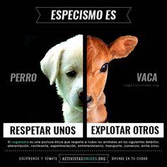 """El #Especismo es una forma de discriminación tan perjudicial e injustificada como el racismo, el sexismo o el aspectismo.  Es discriminar a otros con base en la especie a la que pertenece. Caemos en conducta especista cuando respetamos los intereses, sentimientos e integridad de un perro o un gato, pero sin embargo explotamos, confinamos y quitamos la vida a vacas, pollos, peces, cerdos y demás animales que la industria considera """"de consumo"""".  Si reconocemos que los animales no somos… Mercy For Animals, Animals And Pets, Miss My Best Friend, News Memes, How To Become Vegan, Vegan Baby, Vegan Quotes, Vegan Humor, Why Vegan"""