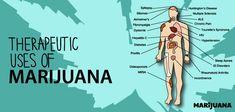 How Marijuana Treats Diseases: The Far Reach of the Endocannabinoid System
