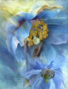 Poppies So Blue ~ Carol Cavalaris