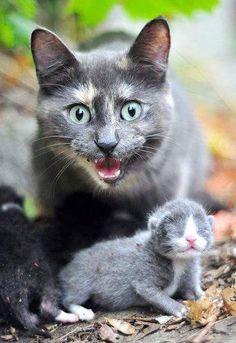 Stay away, it's my baby!!!