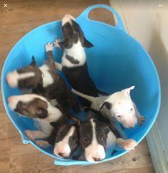 Bucket full of Bullies