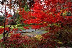 http://nsp-jp.com/gifu/  大智寺 Daichiji-Temple. Gifu city Gifu Prefecture Japan  #大智寺 #岐阜市 #岐阜  #故郷巡礼 #聖地巡礼 #写真好きな人と繋がりたい #紅葉  #gifuphoto #gifu #travel #traveling #journey #tourism #photo #sugiyamanobu #Unknownjapan #instagram #instagramjapan #JapaneseTemple #JapaneseShrine #JapaneseTradition #TravelJapan #JapanTrip #ExploreJapan #JapanAdventure #JapanHoliday #CoolJapan #WonderfulDestinations #Amazing