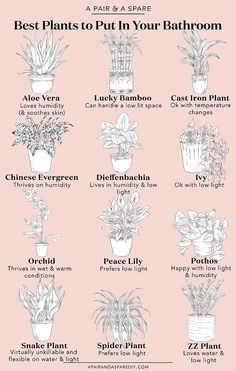 A Guide To The Best Plants For Your Bathroom | a pair & a spare | Bloglovin'