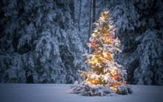 How to Extend the Life of Your Christmas Tree
