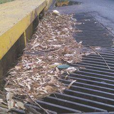 Una boca de tormenta que se encuentra en la Avenida Pablo Neruda en su cruce con Montevideo está llena de basura. Esto se vuelve un peligro cuando llueve porque se puede inundar. Reportero ciudadano: Anónimo