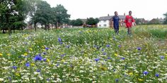 Two men walking through a wildflower meadow in an urban environment