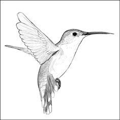 Hummingbird by SeLeB.deviantart.com on @DeviantArt