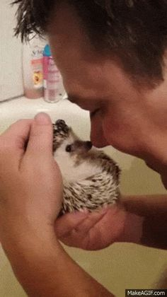 Share this Very sweet hedgehog Animated GIF with everyone. Gif4Share is best…