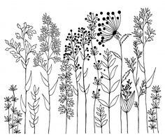 Find Hand Drawn Vector Design Wildflowers Floral stock images in HD and millions of other royalty-free stock photos, illustrations and vectors in the Shutterstock collection. Thousands of new, high-quality pictures added every day. Sharpie Drawings, Sharpie Art, Doodle Drawings, Doodle Art, Tattoo Drawings, Plant Drawing, Wall Drawing, Drawing Pin, Sharpie Zeichnungen