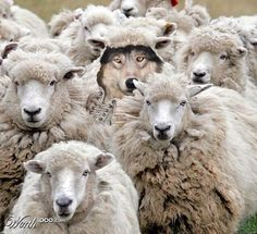 Behold, I send you out as sheep in the midst of wolves. Matthew 10:16 pic.twitter.com/EfqgsZvPaj