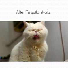 Lmfaoo. After tequila shots