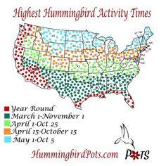 Hummingbird Discover Educational Hummingbird Map Migrations when to hang feeder Hummingbird Bird Bath, Hummingbird Nectar, Hummingbird Plants, Homemade Hummingbird Feeder, Sugar Water For Hummingbirds, How To Attract Hummingbirds, Pretty Birds, Beautiful Birds, Hummingbird Migration