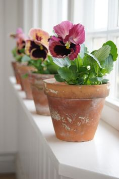 Pansies ~ A definite favorite....in terra cot pots on window sill #flowers #floral