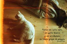 la luna nel cuore la notte nel sangue : Vorrei un caffè nero, un gatto bianco e un arcobaleno su fondo grigio di pioggia.