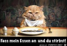lustiges Bild 'Fass mein Essen an....jpg'- Eine von 59859 Dateien in der Kategorie 'Lustiges' auf FUNPOT.