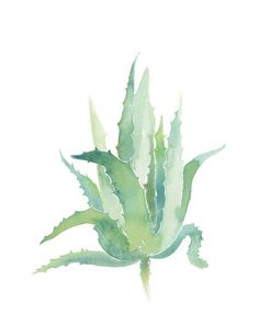 Watercolor Aloe Vera Cacti and Succulents by WatercolorPaperie