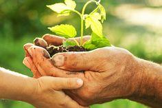 Mangiare #biologico riduce notevolmente i livelli di pesticidi nel corpo. Ecomarket scegli il #bio www.ecomarket.bio