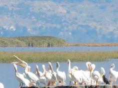Bear river migratory bird refuge-Utah