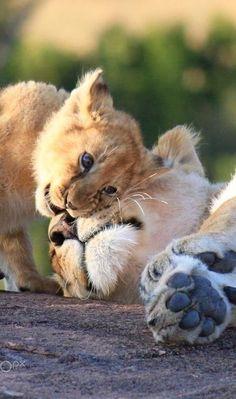 ***BIG-CATS***