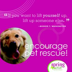 Encourage pet rescue!