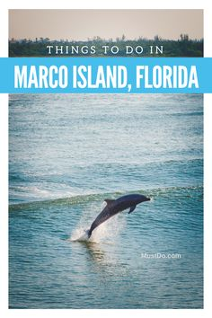Things to do in Marco Island and Naples, Florida.
