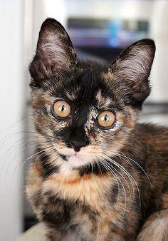 For More  Cat Home     Click Here http://moneybuds.com/Cat/