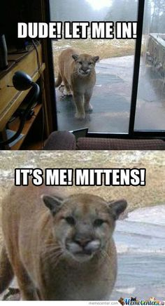 Top 30 Funny Animal Quotes and Pics