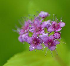 Untitled | Flickr – Condivisione di foto!