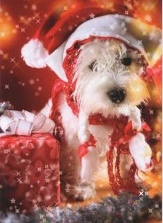 """Yippy Westie Christmas Card, from Dogstuff.com. A great Christmas card for people and dogs alike. Features a West Highland White Terrier in a Santa hat and scarf. Inside reads: """"Merry christmas and a Yippy New Year!"""". Includes box of 12 (5 x 7 inch) cards and 13 envelopes."""