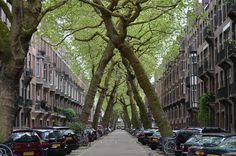 An Allee of Tilted Trees, Lomanstraat at Amstelveenseweg. Amsterdam